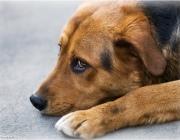 В Шумилино милиционер застрелил бездомного пса