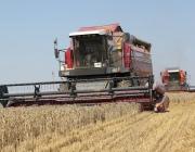 Урожай-2017: Аграрии Витебщины приступили к выборочной уборке зерновых