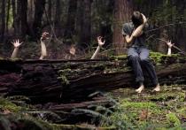 Как следует вести себя в лесу, чтобы не заблудиться?