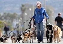 Прогулки с питомцами, или  Что грозит владельцам  недисциплинированных собак?