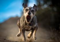 В Верхнедвинском районе участились случаи укуса бездомными собаками