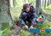 С начала августа в лесах Витебщины заблудилось несколько десятков человек