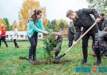 Аллею молодежи посадили в Новополоцке