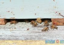 Пчелы стали причиной раздора соцработника, пожилой женщины и соседа-пчеловода в Витебском районе