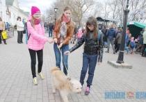 Акция-ярмарка в поддержку бездомных животных прошла в Витебске (+ФОТО)