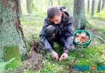 С начала сезона в Витебской области 15 человек отравились грибами