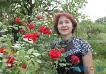 Как вырастить розу из черенка и создать розарий на приусадебном участке своими руками