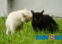 Заболеваемость бешенством среди домашних животных в Витебской области увеличилась втрое