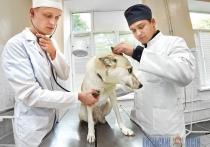 Сколько витебчане готовы выложить денег ветеринарам для спасения питомца и почему цены кусачие