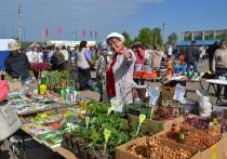 Весенняя городская ярмарка пройдет в Витебске 8 апреля