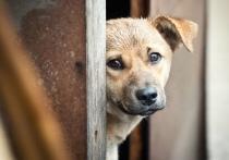 Витебский приют для бездомных животных ищет сантехника и стройматериалы